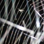 ЖИТЕЛИ ДАЧИ - комар