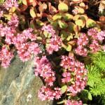 Дача - цветы 1