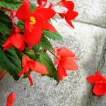 Дача - цветы - 2
