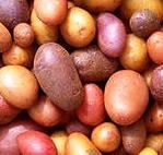 клубни картошки