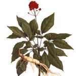 ЖЕНЬШЕНЬ — «дар богов, царь лесных растений, корень жизни»