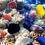 фото, кораллы, красное море, рыбки