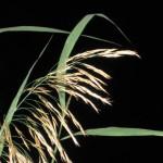 Дача - ночь - трава