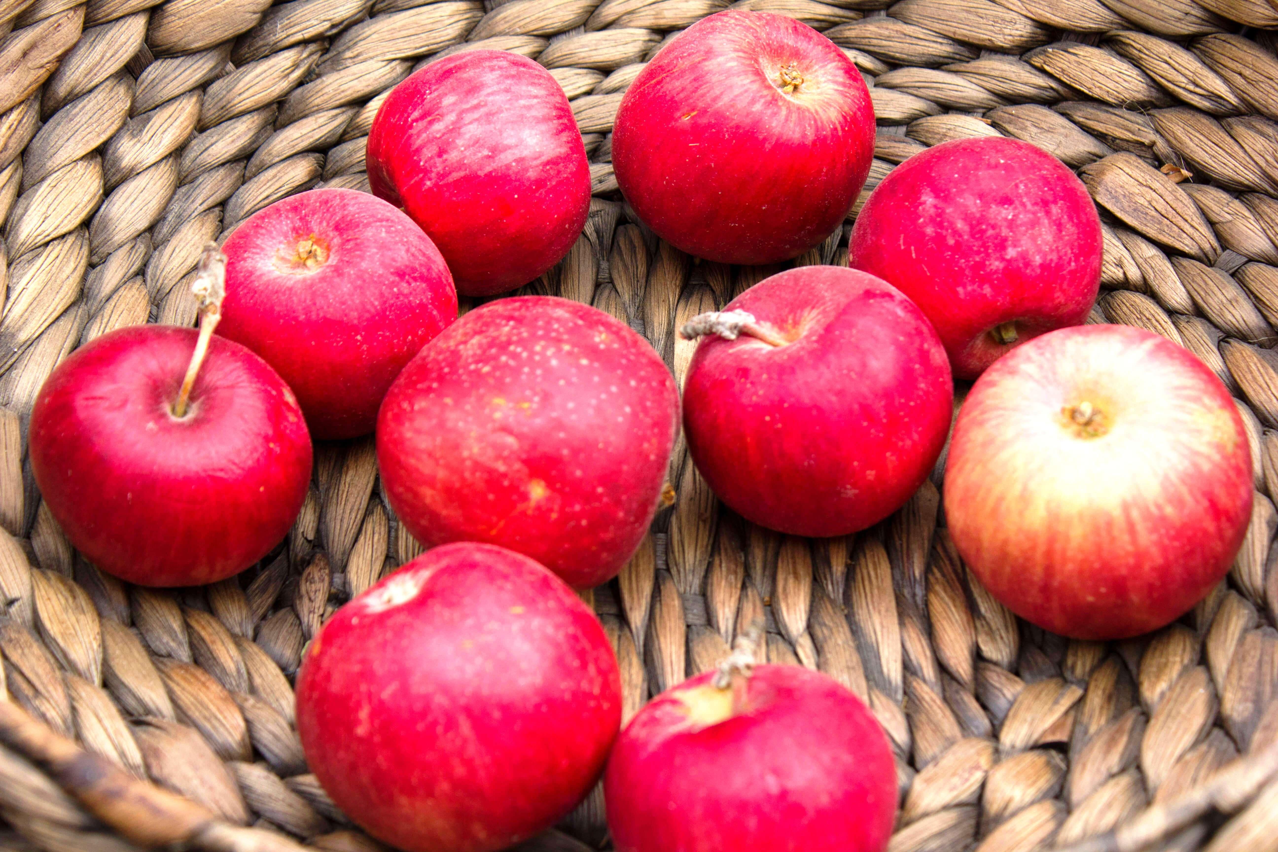 яблоки красивое фото